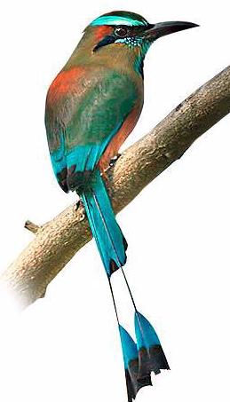Kikil Pájaro En Anida Que – Toj El Cenote ynmNwv80O